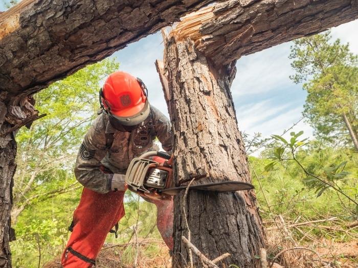 Best Chainsaw For Arborist