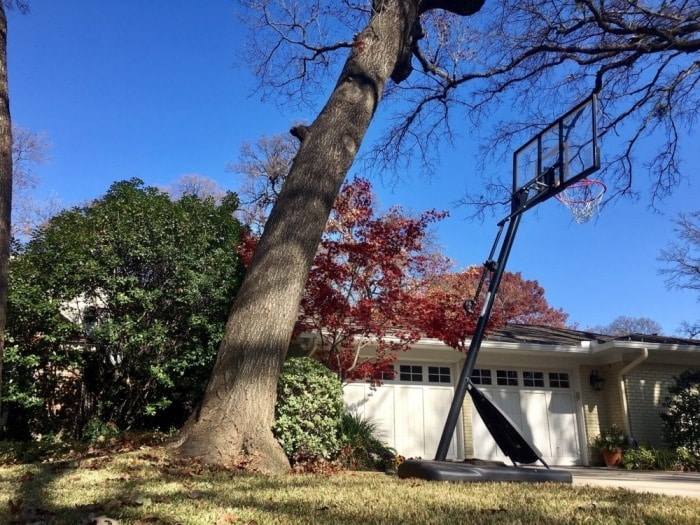 How To Cut Down A Leaning Tree Safely