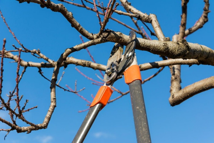 How To Cut Tree Limbs Over House