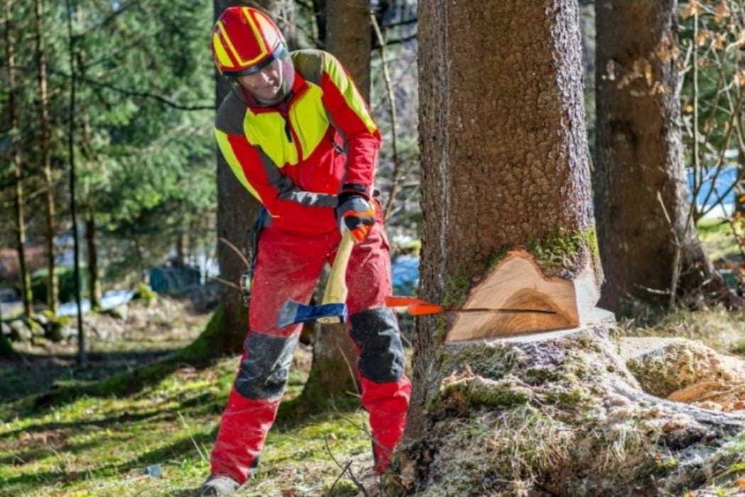 How To Fell A Leaning Tree In The Opposite Direction