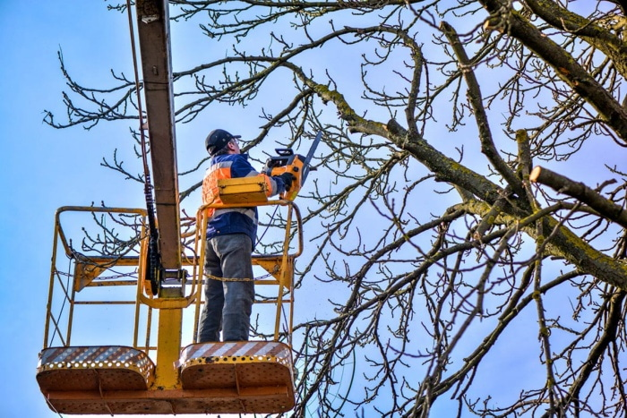 you can find an arborist to cut your tree limbs