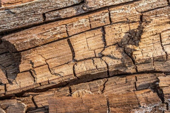 White Molds On Wet Wood