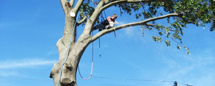 how to cut tree limbs over your house